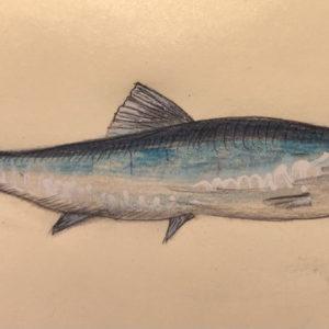 Humains, merlans et sardines sont sur le même bateau...